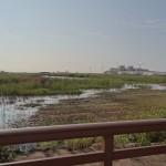 湿地整備進行中