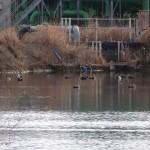 2016.2.7淡水池