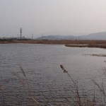 2016.2.27湿地